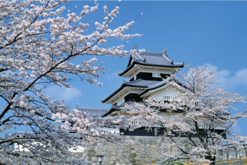 小峰城の桜